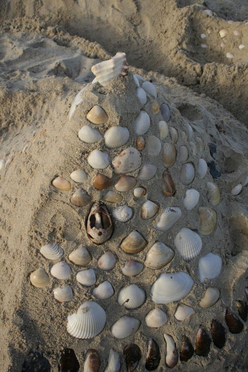 snails sand summer