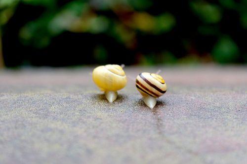 snails crawl together