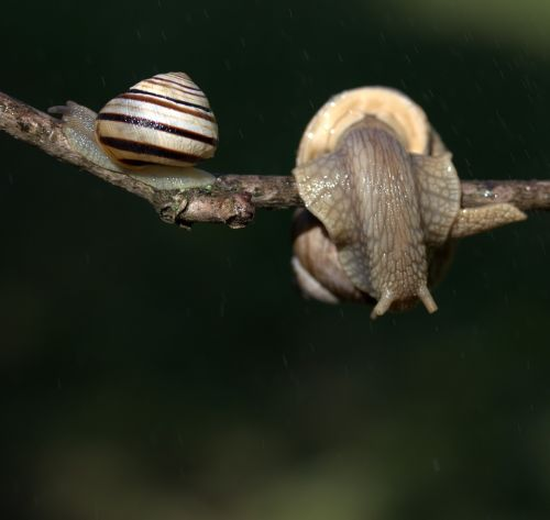 snails casey hooked