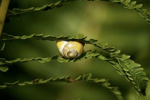 snails reptiles mollusk
