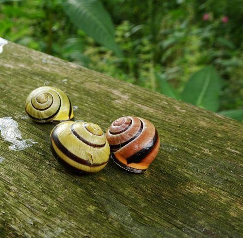 snails garden nature