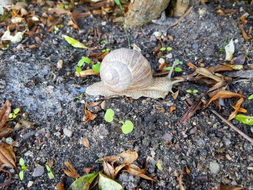 snails hungry trip