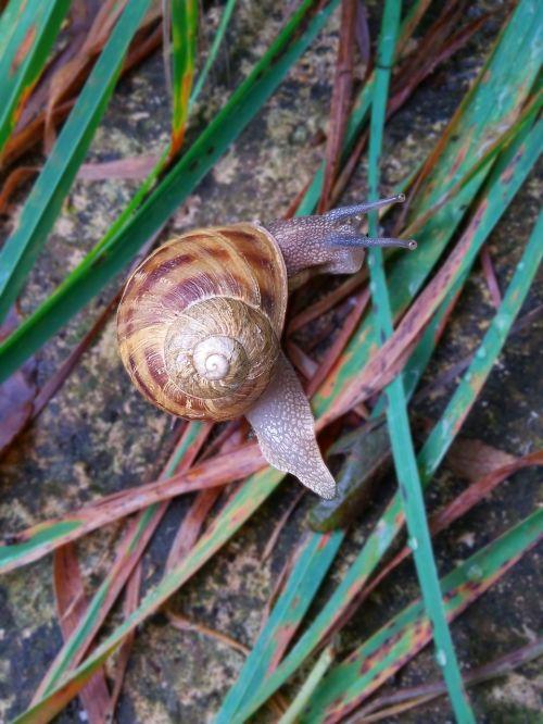 snails grass landscape