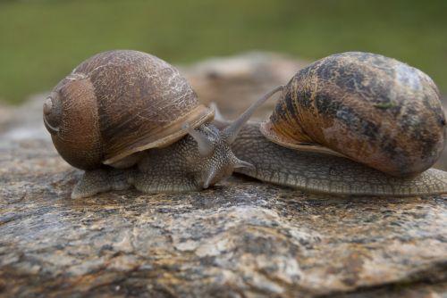 snails snail molluscum