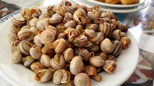 snails  snail  stew