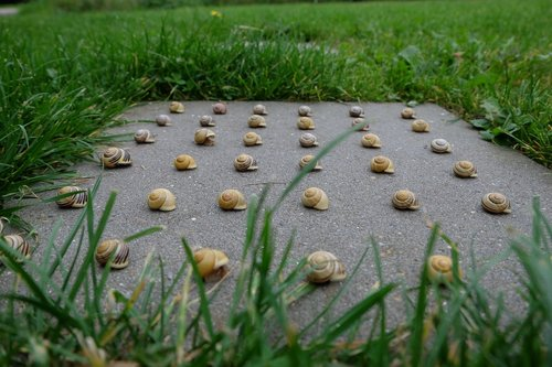 snails  nature  pattern