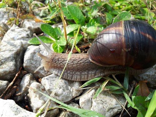 snails  slug  insect