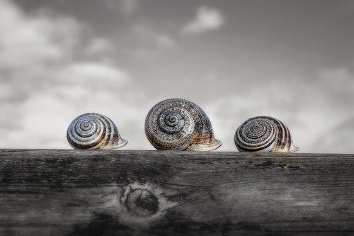 snails  molluscum  shell