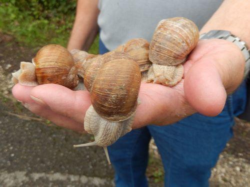 snails nature field