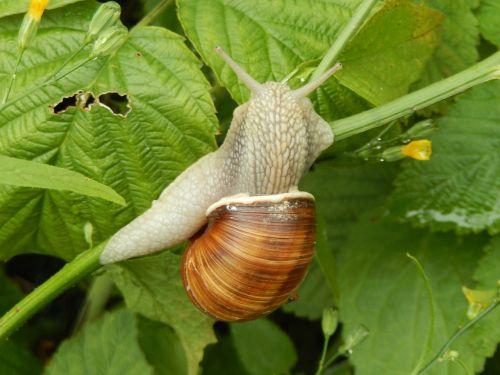 snails nature garden