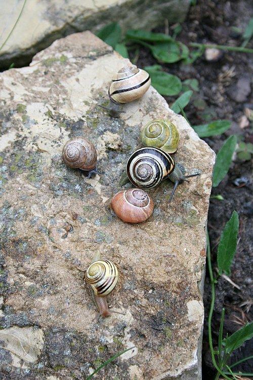 snails  seashell  rain