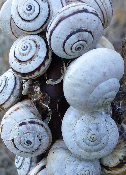 snails shell many