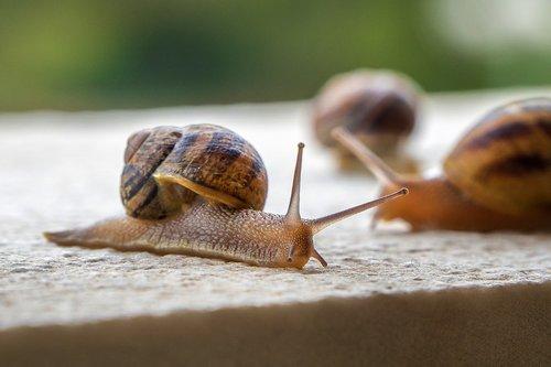 snails  gastropods  molluscs