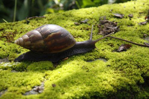 snails moss green