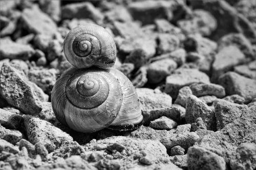 snails shell snail shells