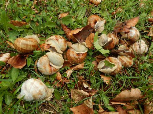 snails animals nature