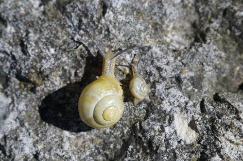 snails race crawl