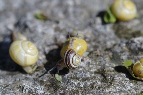 snails crawl steinig