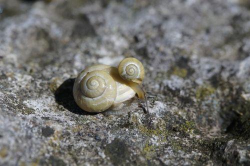 snails housing molluscs