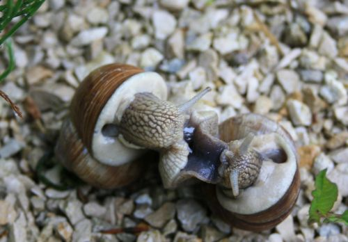 snails snail lovers