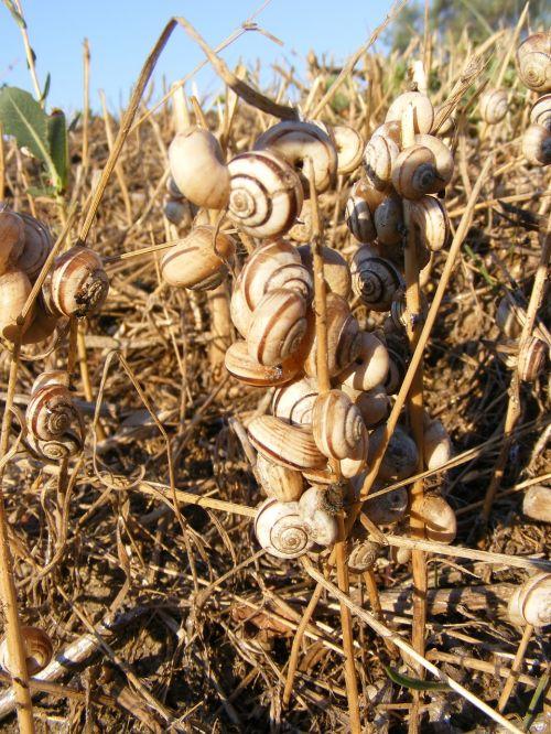 snails dead grass