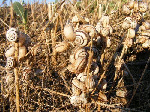 snails stuck grass
