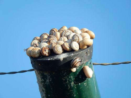 snails taking the sun post