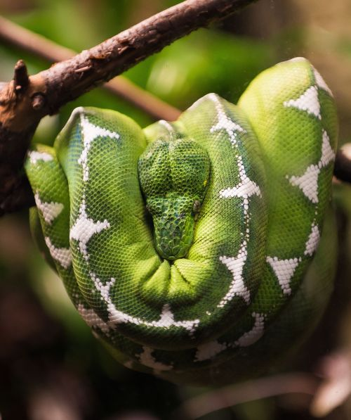 snake reptile nature
