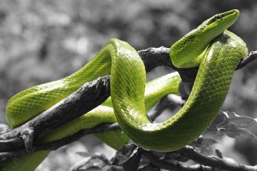 snake reptile grass snake