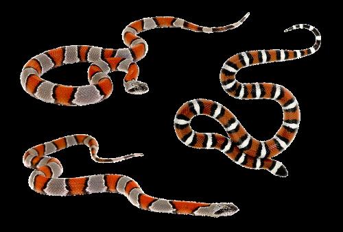 snake terrarium bastards