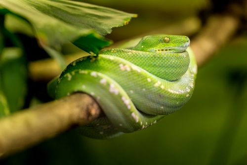 snake green macro