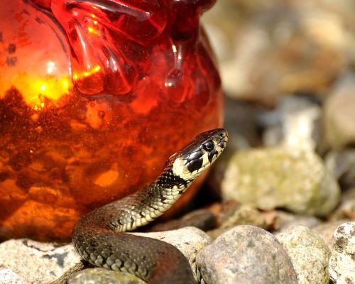 snake grass snake reptile