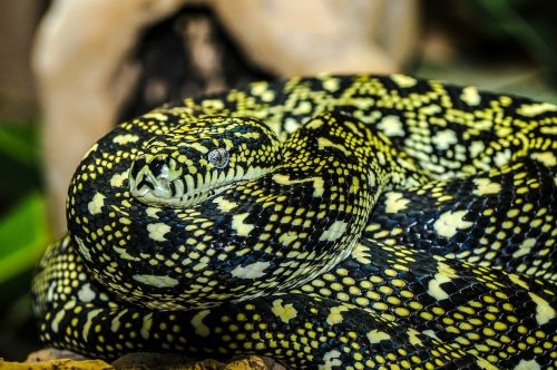 snake zoo macro