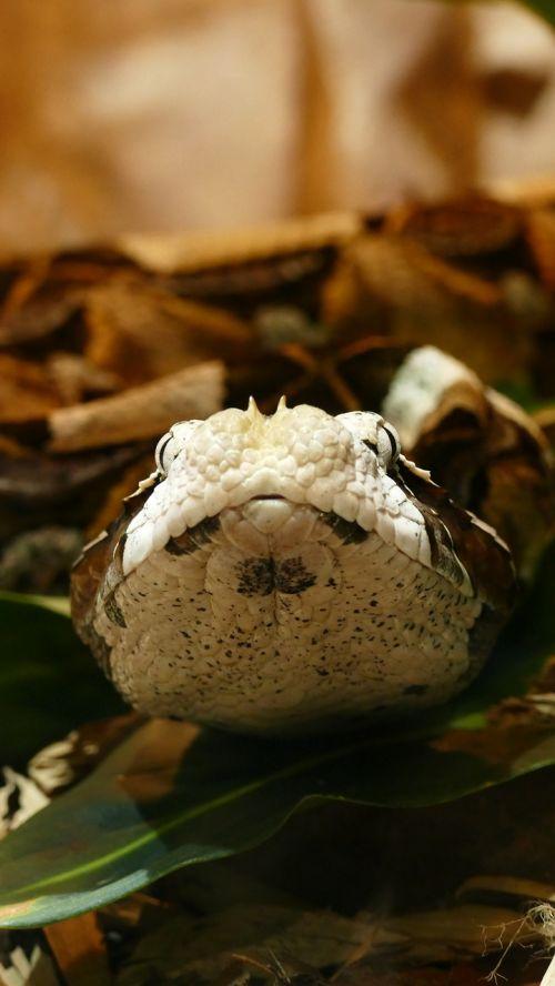 snake wildlife reptile