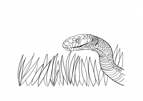 snake serpent drawing