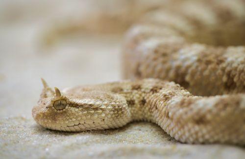snake terrarium toxic