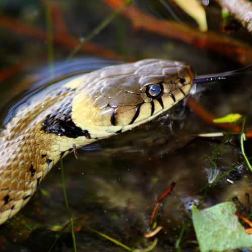 snake broads norfolk