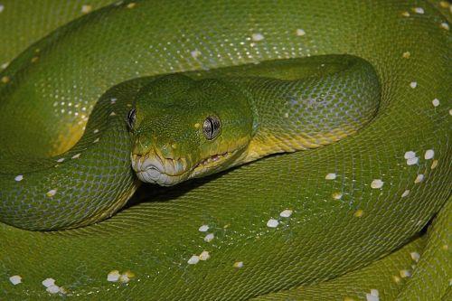 snake green reptile