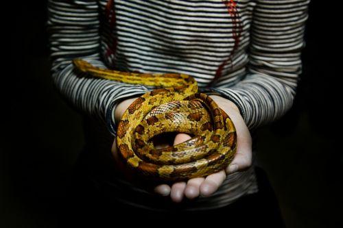 snake girl holding