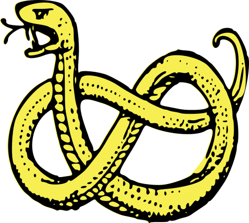 snake coiled serpent