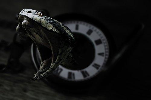 snake  clock  black