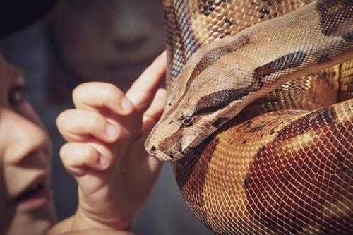 snake  phyton  creature