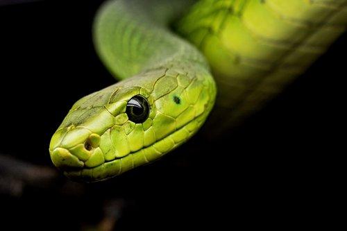 snake  reptile  tree snake