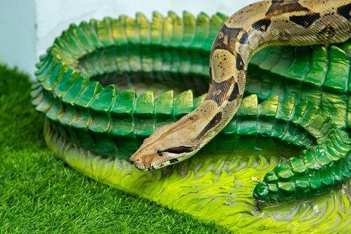 snake  animal  reptile