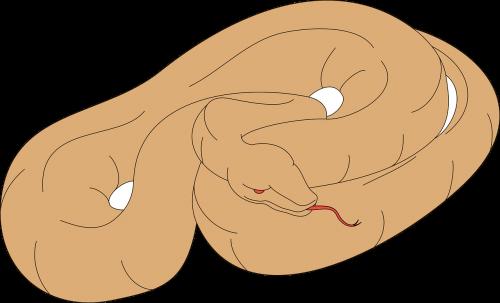 snake brown light