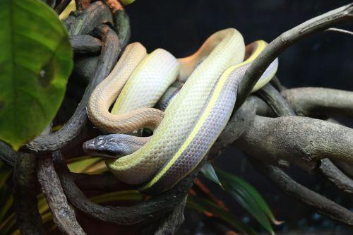 snake branch animal
