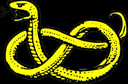 snake serpent yellow