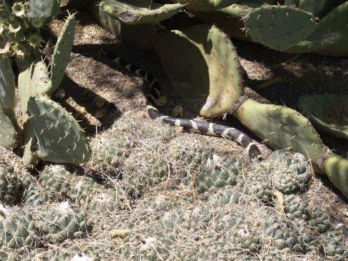snake animal nature