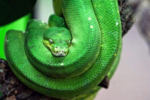 snake toxic green