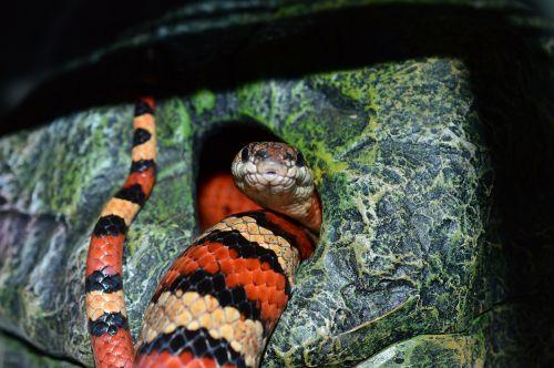 snake pattern chain natter